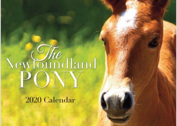 newfoundland pony society 2020 calendar